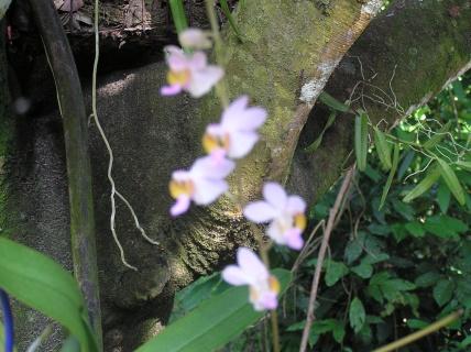 สวนป่ามีดอกไม้
